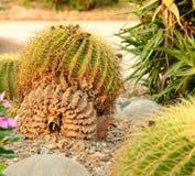 Kaktuspflanze Stockbild