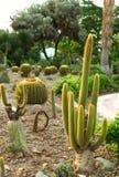 Kaktuspflanze Stockfotos