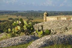 Kaktuspflanze mit Festung im Hintergrund Lizenzfreies Stockfoto