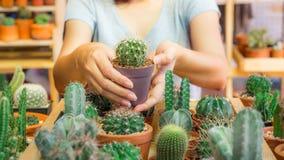 Kaktuspflanze- und Naturkonzept - Kaktus holded durch Hände der Frau im Glashaus Lizenzfreies Stockbild