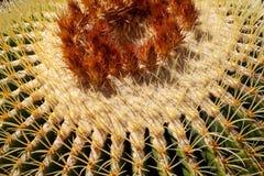 Kaktuspflanzemuster Lizenzfreies Stockfoto