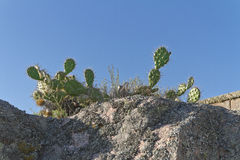 Kaktuspflanzen über Felsen Niedrige Winkelsicht Lizenzfreie Stockbilder