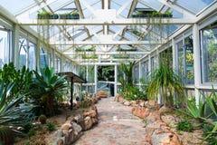 Kaktuspflanzen Lizenzfreies Stockfoto