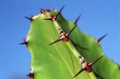 kaktuspiggar royaltyfri bild