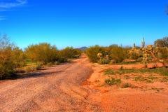 kaktussaguaro Fotografering för Bildbyråer
