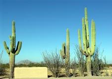 kaktussahuaro Arkivbild