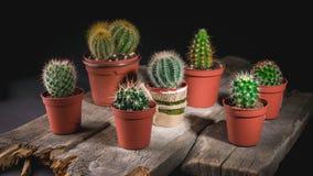 Kaktussamling på mörk bakgrund Låg key lighting royaltyfria bilder