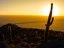 Kaktusschattenbild im Sonnenaufgang auf Salar de Uyuni lizenzfreies stockbild