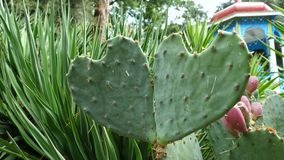 Kaktussidor i formen av en hjärta lager videofilmer