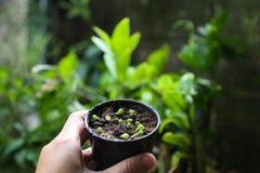 Kaktussprössling lizenzfreies stockfoto
