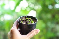 Kaktussprössling mit dem Licht lizenzfreies stockfoto