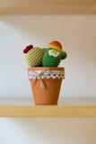 Kaktussuckulenter Arkivfoton