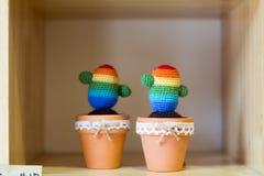 Kaktussuckulenter Fotografering för Bildbyråer