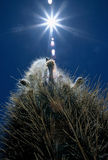kaktussun royaltyfri fotografi