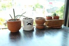 Kaktustöpfe setzten sich auf dem Tisch stockfotografie