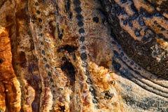 Kaktustextur från San Felipe, Mexica fotografering för bildbyråer