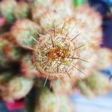 Kaktustorn royaltyfria bilder