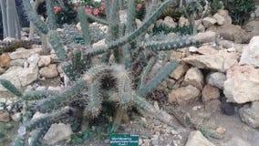 kaktusträd i den bali botaniska trädgården royaltyfri fotografi
