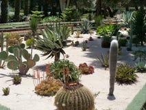 Kaktusträdgård Royaltyfri Foto