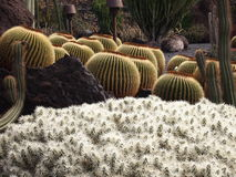 Kaktusträdgård Arkivfoton