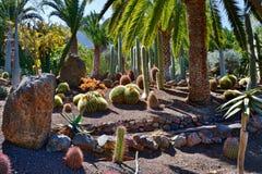 Kaktusträdgård Royaltyfria Bilder