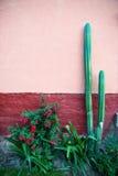 Kaktusträdgård, Adobe murbrukvägg Fotografering för Bildbyråer