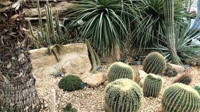 Kaktusträdgård, burken, RHS Wisley som wokar, Surrey, UK Royaltyfri Foto