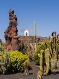 Kaktusträdgård i Lanzarote, kanariefågelöar. Arkivfoto