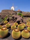 Kaktusträdgård i Lanzarote, kanariefågelöar. Arkivbilder