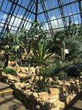 Kaktusuppehälle i en öken Royaltyfria Bilder
