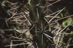Kaktusväg till machupicchuen Arkivbilder