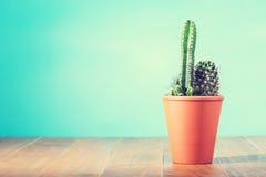 Kaktusväxt i blomkruka royaltyfria foton