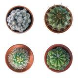 Kaktusväxt i samlingen för bästa sikt för lerakruka som isoleras på vit b Royaltyfria Bilder