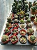Kaktusväxter Royaltyfria Bilder