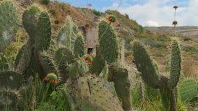 Kaktusväxter på ett torrt land lager videofilmer