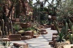 Kaktusväxthus Arkivbild