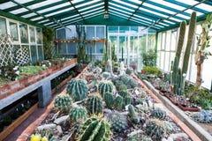 Kaktusväxthus arkivfoton