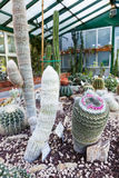Kaktusväxthus Royaltyfri Bild