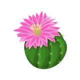 Kaktusväxtillustration Arkivfoto