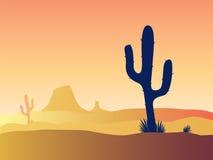 Kaktuswüstensonnenuntergang Stockfotos