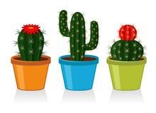 kaktusy Zdjęcia Stock