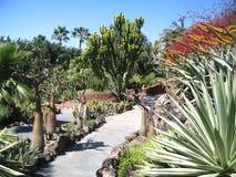 kaktusy Obraz Stock