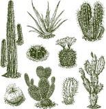 Kaktusy ilustracji