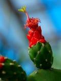 kaktusy obraz royalty free