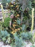 kaktusy zdjęcie royalty free