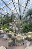 Kaktusy i rośliny od dziesięć różnych klimat stref przy księżnej walii konserwatorium przy Kew ogródami, Richmond na Thames, Angl Obrazy Royalty Free