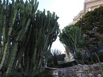 Kaktusy jako dekoracja jard przy głównym wejściem sławny kasyno w Monte, Carlo, -, Monaco zdjęcia stock