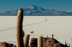 Kaktusy na Isla inka Huasi w Salar De Uyuni Obraz Stock
