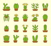 kaktusy Pustynne rośliny dla terrariów i rockowych ogródów Płaska ikona Obraz Royalty Free