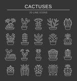 kaktusy Pustynne rośliny dla terrariów i rockowych ogródów Kreskowa ikona Obraz Stock